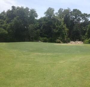 Fernandina Beach Greens Update July 18