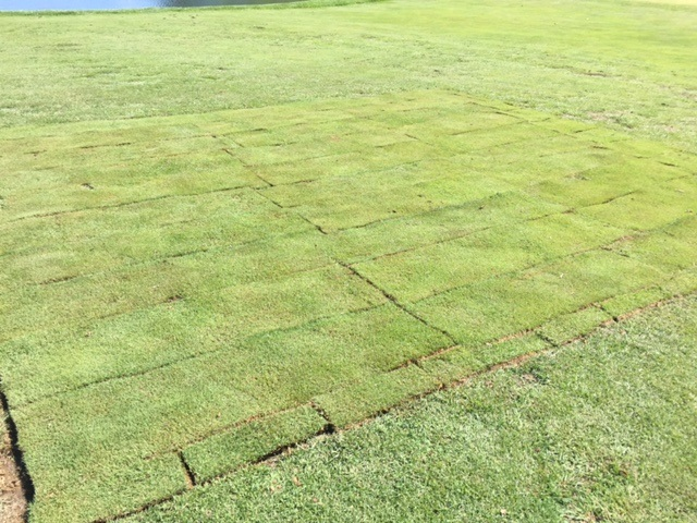 The sod growing in on the 9th fairway at Lake Presidential Golf Club in Upper Marlboro, MD