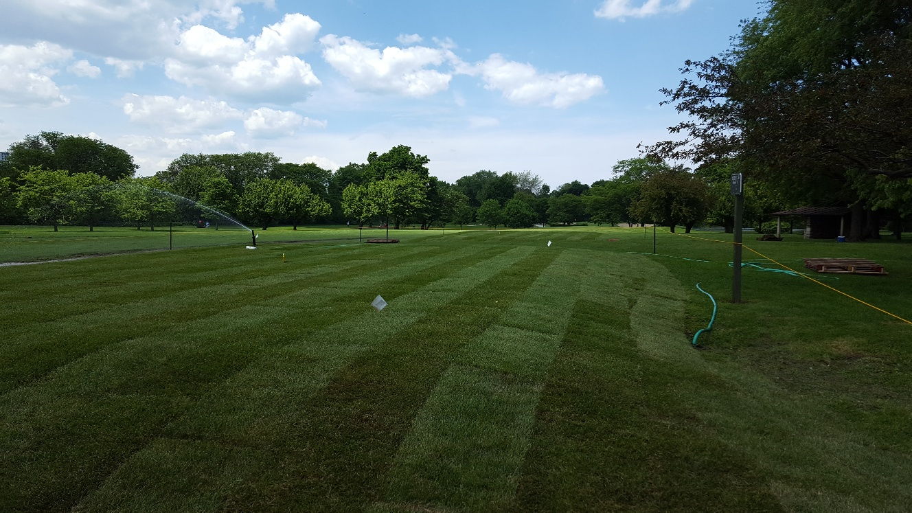 Teeing Area at Sydney Marovitz June 2019