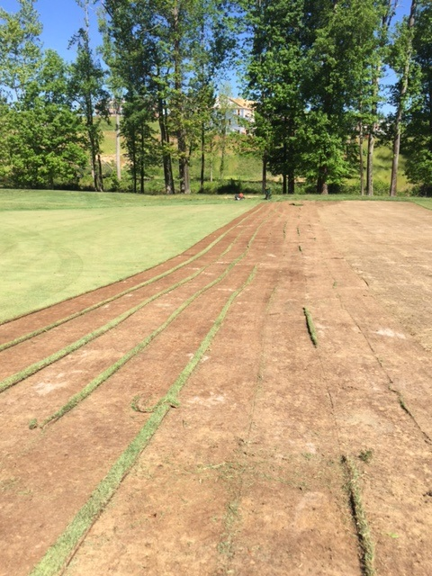 Removing sod on the first fairway at Lake Presidential Golf Club in Upper Marlboro, MD