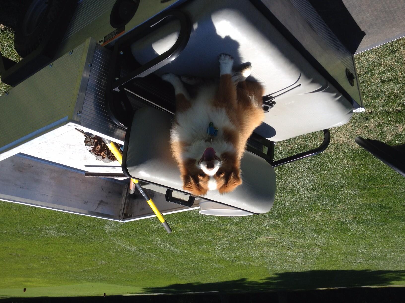 Bucky the dog