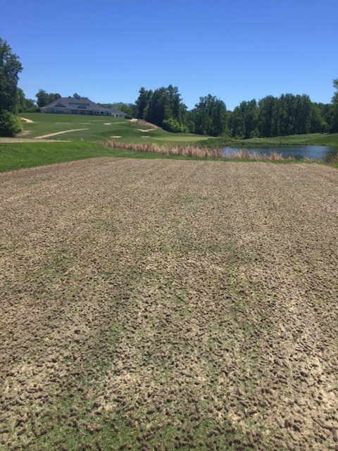Tee box aerification at Lake Presidential Golf Club in Upper Marlboro, MD