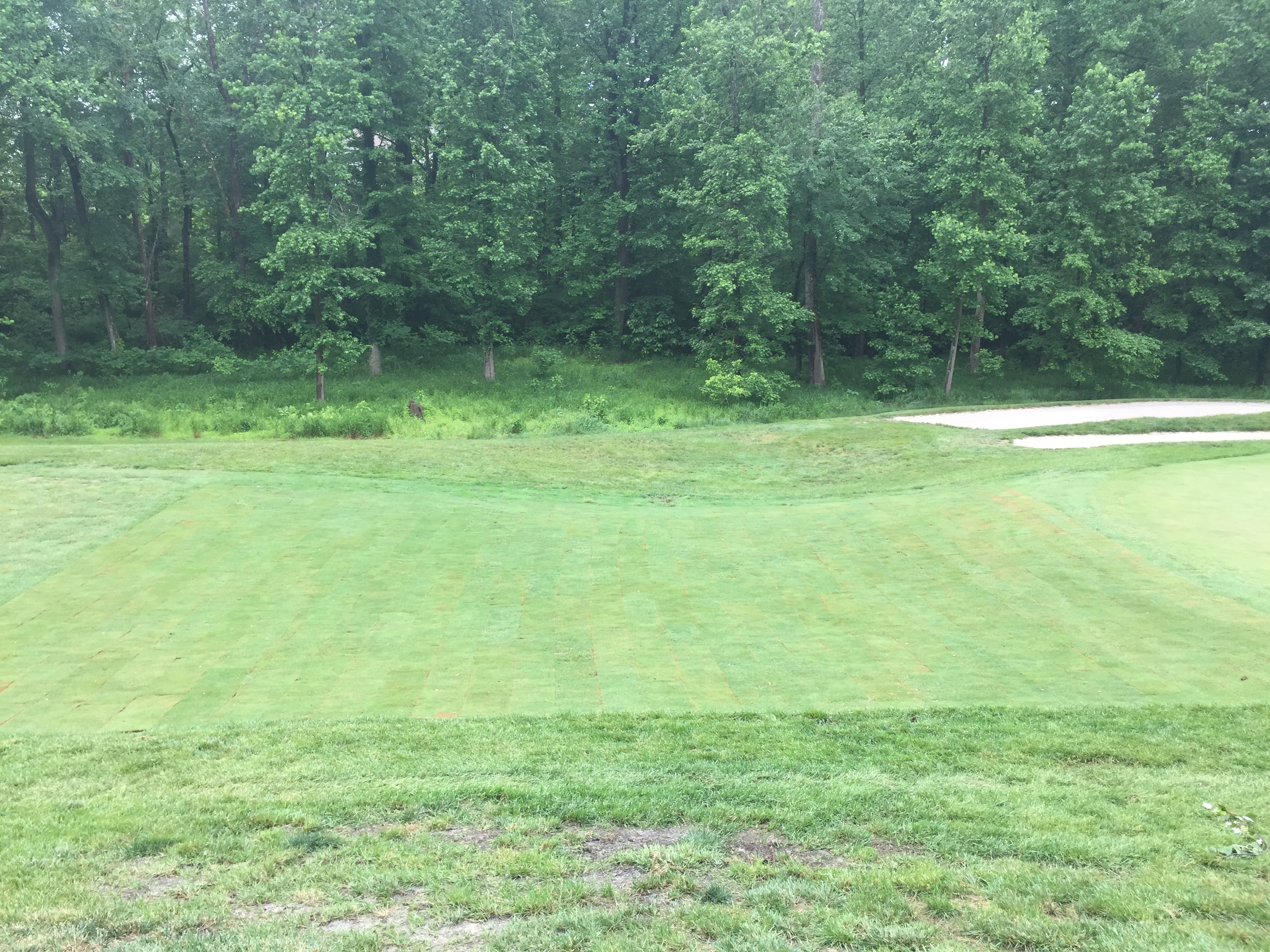 The grass growing in on the 5th fairway at Lake Presidential Golf Club in Upper Marlboro, MD